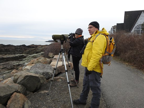 Barrington, Νιού Χάμσαϊρ: Birdwatching on the Marginal Way in Ogunquit, ME