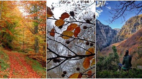 Marches, Italie : L'autunno invita a lunghe passeggiate tra i boschi per ammirare i caldi colori che solo questa stagione riesce a regalare. Siete pronti a partire con noi per gli itinerari del foliage nelle Marche? 🍁🍂🌲   Leggete in nostro ultimo articolo del blog: https://www.destinazionemarche.it/itinerari-foliage-nelle-marche/  #destinazionemarche