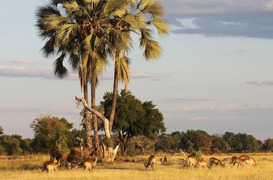 5-Day Victoria Falls and Hwange...