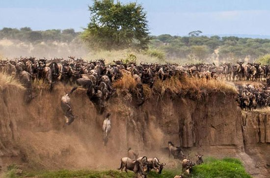 3-Day Maasai Mara Guided Safari from...