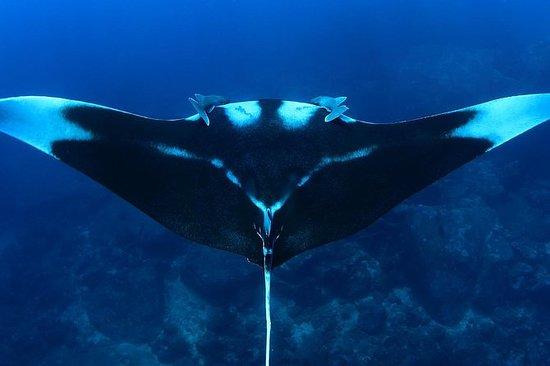 Immersioni subacquee Koh Bon di un