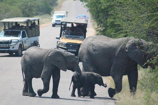 Kruger-Nationalpark - Tagestour ab...