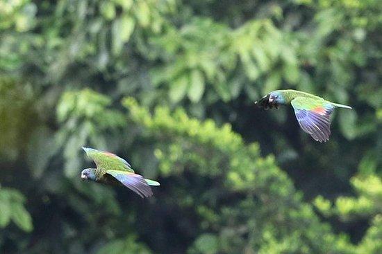 Forêt équatoriale et observation des...