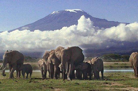 3日間、オールインクルーシブAmboseli Camping Safari