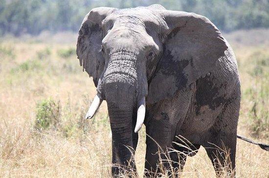6-tägiger Samburu, Lake Nakuru und...