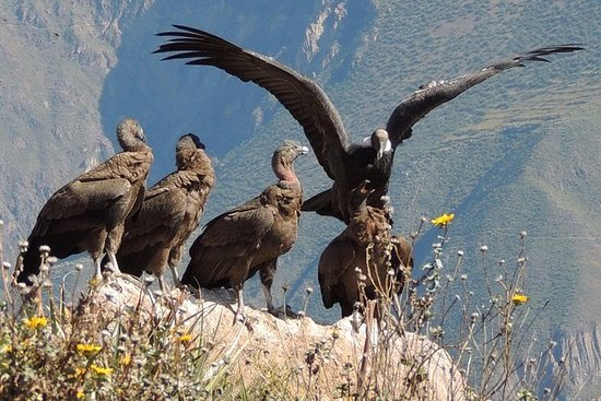 2-dagers Colca Canyon og Condor Tour...