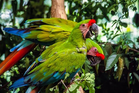 Visita al Zoo El Pantanal en Guayaquil