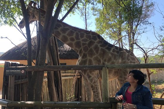 Pilanesberg Lion Safari