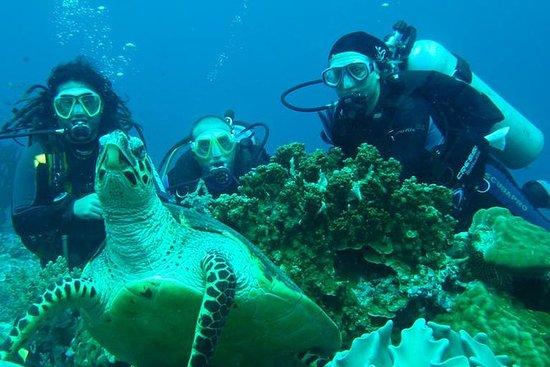 Tour de plongée: Bahia Darwin et...