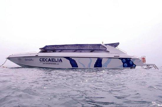 Buceo de Día Completo y Snorkeling en...
