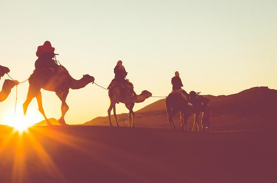 Sunset or Sunrise Camel ride in the...