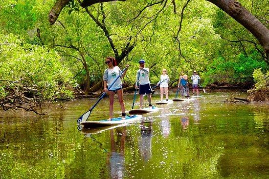 拜伦站起来划桨自然之旅