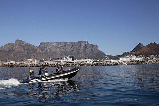 V&A Waterfront Ocean Safari