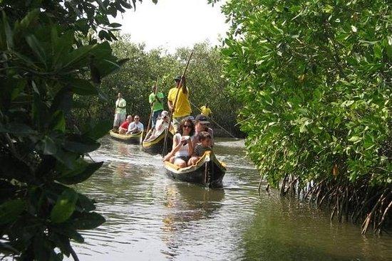 Tour des mangroves