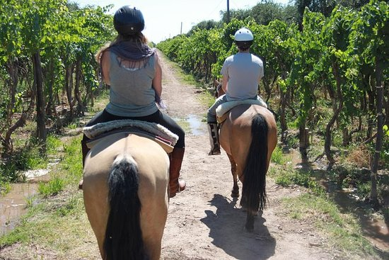 Horseback ride through vineyards...