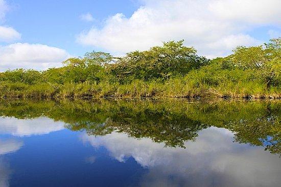 River Tubing 45 minuter från Placencia