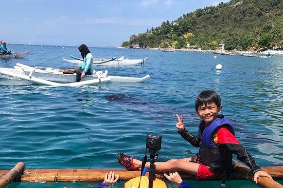 Cebu Whalesharks Snorkling Tour