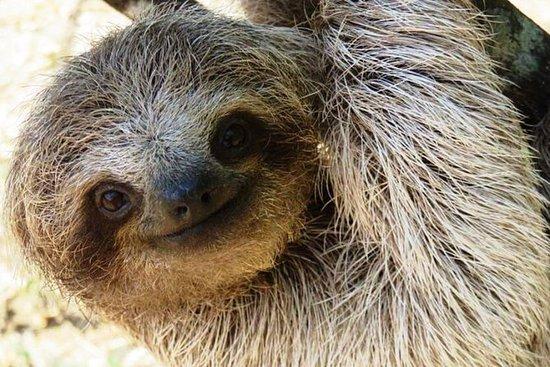 Escursione di mezza giornata a Sloth