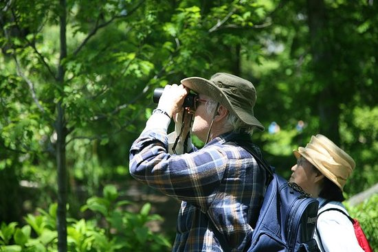Thattekad Bird Watching Tour