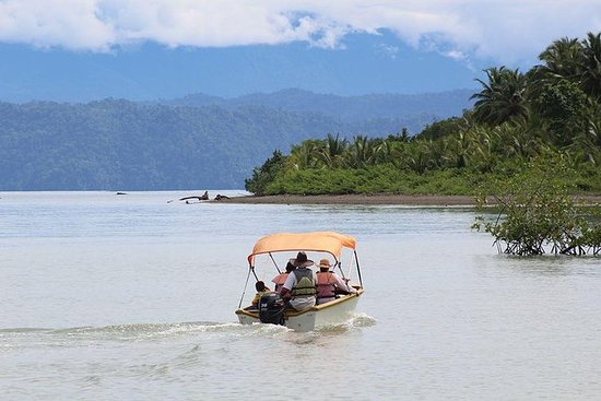 Mangroves Exploration by boat