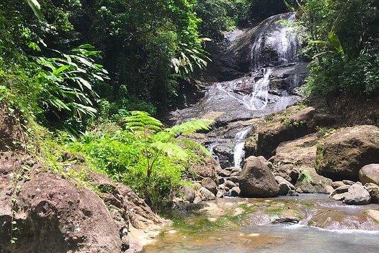 Randonnée dans la forêt pluviale et...
