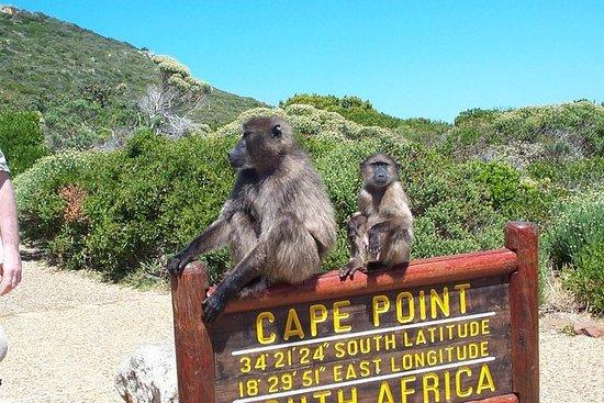 Cape Point och Stellenbosch Wine Full ...