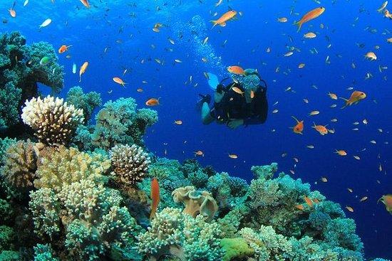 Dykking - Snorkling i Catalina Island...