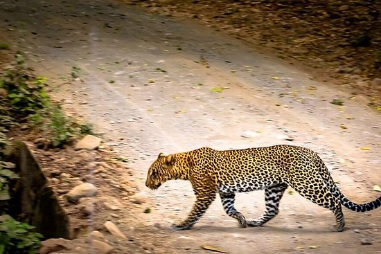 5 días Serengeti y Ngorongoro Luxury...