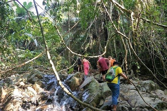 Caminata en la selva