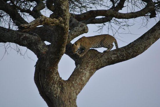 Camping 6 dager, Arusha nasjonalpark...