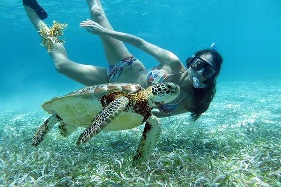 Snorkel de la barrera de coral: medio...