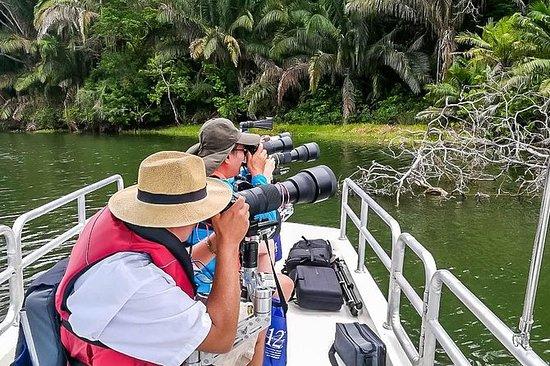 Rainforest Photography Safari