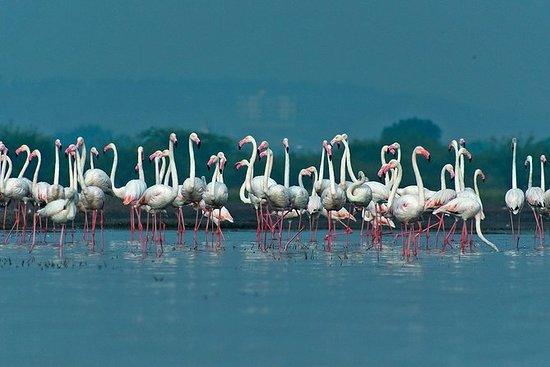 Wild Mumbai - Eine geführte Tour...