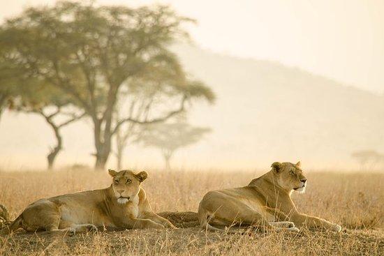 14 jours de safari en Tanzanie et au...