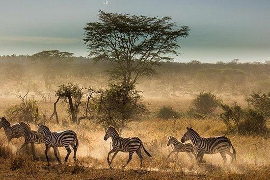 6 Dage Tanzania Budget Camping Safari
