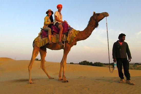 Camel Safari En Jaisalmer