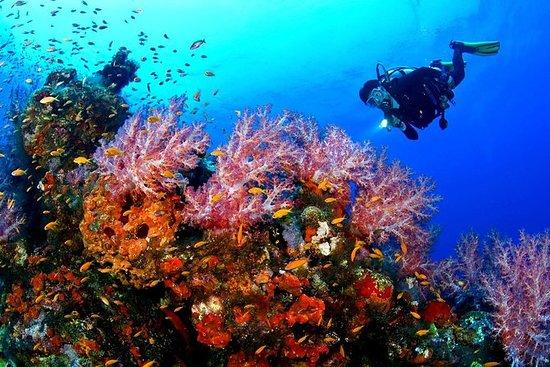 Bali Nusa Dua Diving Experience