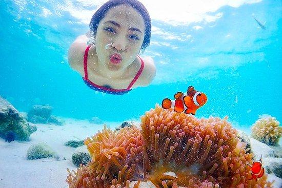 Nemo island snorkeling tour near...
