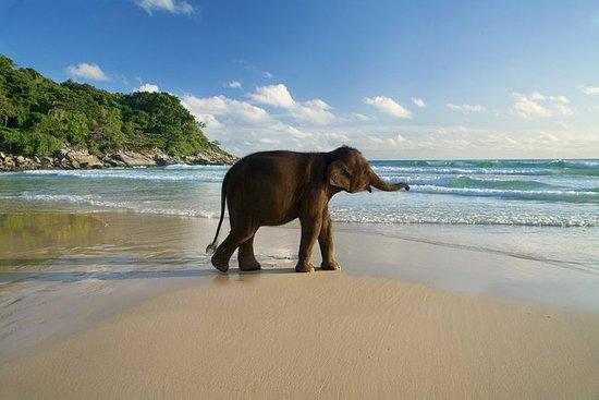 Eco Safari Demi-journée depuis Phuket