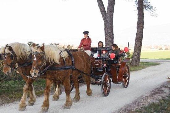 Entrenador, caballo y pic-nic a...