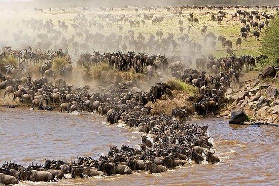 Siga el Gran Serengeti de Migración...