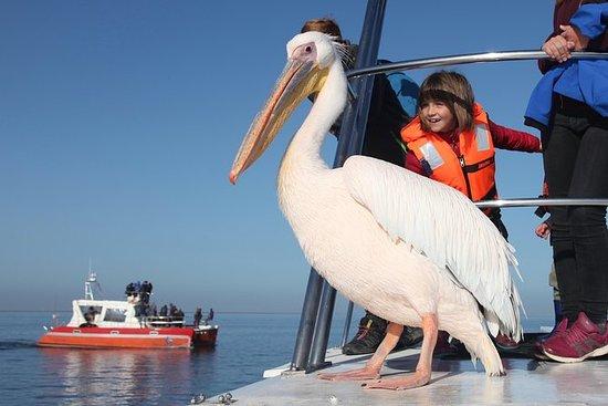 Mola Mola Marine Dolphin Cruise from...