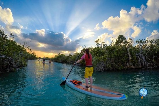 Sunset SUP Tour: Mangrove Route