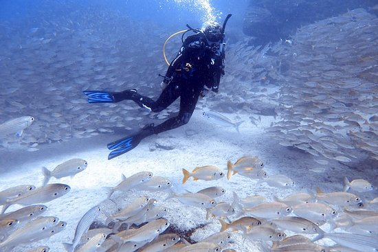Scuba Diving in Tenerife Try Dives...
