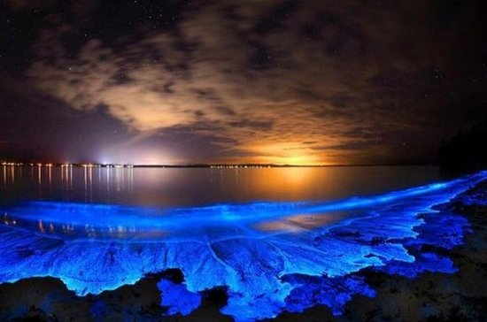 Private Luxury Boat Bioluminescence...
