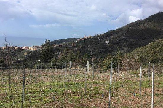 Wine tour Bonassola - Visite d'un...
