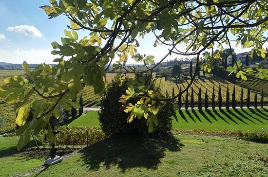 Verona Small Group vin tour