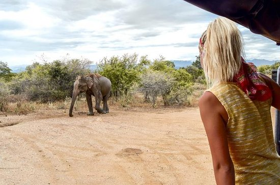 Udawalawe National Park Safari med...