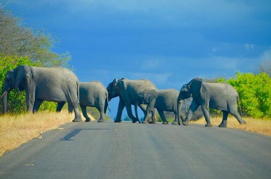4 Tage Safari und Panorama Route des...