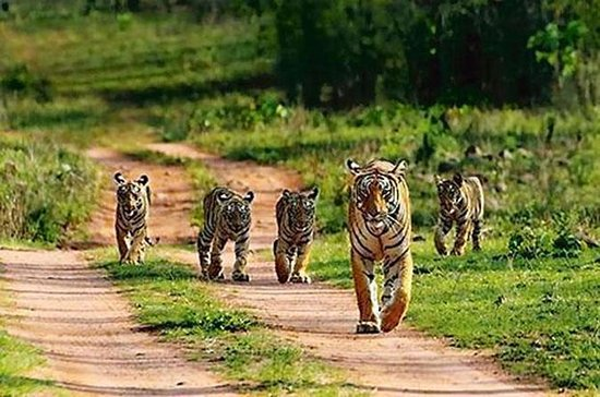 RANTHAMBHORE TOUR WITH ONE RIDE OF...